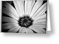 The Daisy II Greeting Card