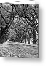 The Deep South Monochrome Greeting Card