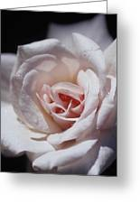 The Delicate Pale Pink Petals Greeting Card by Jason Edwards
