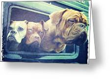 The Dog Taxi Is A Hummer Greeting Card by Nina Prommer
