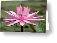 The Dragonfly And The Pink Water Lily Greeting Card