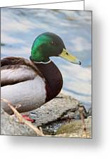 The Duck Greeting Card