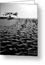 The Dunes At Dusk Greeting Card