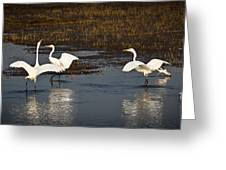 The Egrets Greeting Card