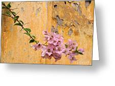 The Escaping Bougainvillea Greeting Card