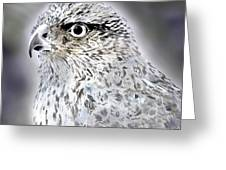 The Eye Of An Eagle  Greeting Card by Yvonne Scott