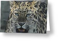 The Eyes Of A Jaguar Greeting Card