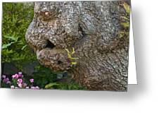 The Face In The Tree Greeting Card