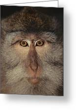 The Face Of A Long-tailed Macaque Greeting Card