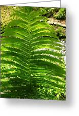 The Fern Greeting Card