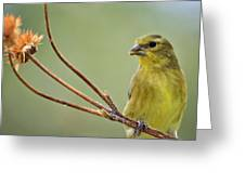 The Finch  Greeting Card