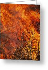 The Flames Of A Controlled Fire Greeting Card