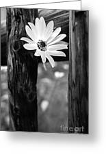 The Flower Bw Greeting Card