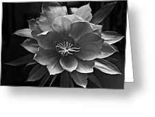 The Flower Of One Night Greeting Card