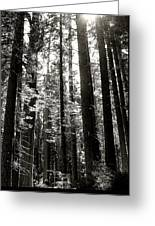 The Forest Through The Trees Greeting Card