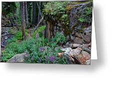 The Forest Trail Greeting Card