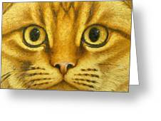 The French Orange Cat Greeting Card