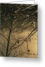 The Frozen Branches Of A Small Birch Greeting Card