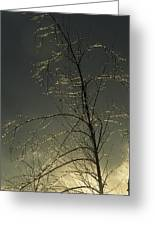 The Frozen Branches Of A Small Tree Greeting Card
