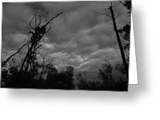 The Gaggle Assiniboine Forest Winnipeg Greeting Card