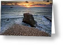 The Gannet Colony Greeting Card