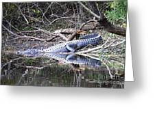 The Gator That Lives Under The Bridge Greeting Card