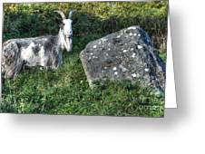 The Goat And The Stone Greeting Card