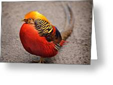 The Golden Pheasant Greeting Card