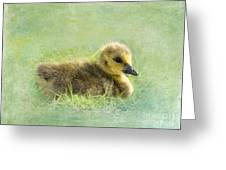 The Gosling Greeting Card