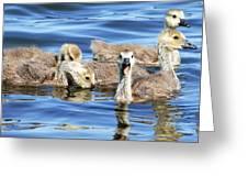The Goslings Greeting Card