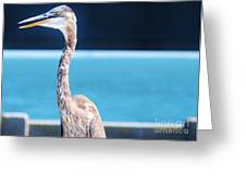 The Great Heron Greeting Card