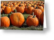 The Great Pumpkin Patch Greeting Card