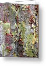 The Green Bark Of A Tree Greeting Card