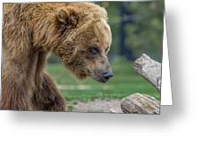 The Grizzly In Spring Greeting Card