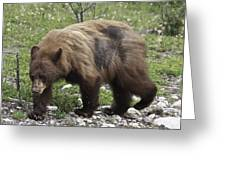 The Grizzly Greeting Card