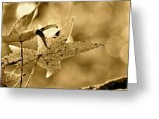 The Gum Leaf Greeting Card