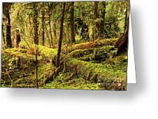 The Hall Of Mosses Greeting Card