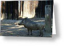 The Handsome Warthog Greeting Card