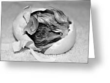 The Hatchling Greeting Card