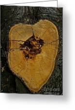 The Heart Of A Tree Greeting Card