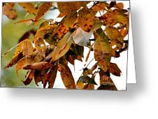 The Hickory In Autumn 2 Greeting Card