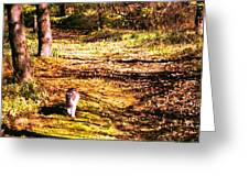 The Hiker Greeting Card
