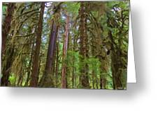 The Hoh Rain Forest Greeting Card