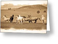 The Horse Herd Greeting Card
