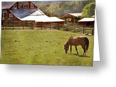 The Horse In The Barn Yard Greeting Card by Kathy Jennings