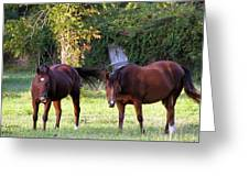 The Horses Greeting Card