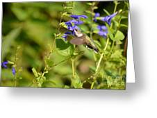 The Hummers Muzzle  Greeting Card