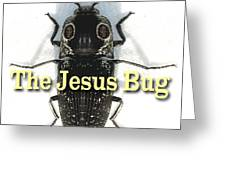 The Jesus Bug Greeting Card