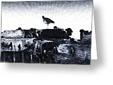 The Jetty Bird Greeting Card