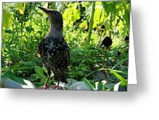 The Jungle Below Our Faces Greeting Card